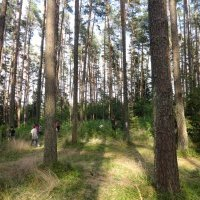 summer_time_2015_0203.jpg